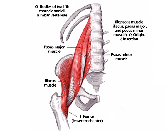 Read more about the article Three Iliopsoas Muscles That Cause Lots Of Hip Pain